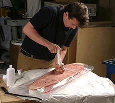 A Vacuum Bag Laminates the Veneers